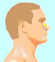 влияние на точки для лечения орви