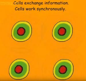 Взаимодействие клеток организма и аппарат СПИНОР