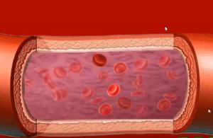 Функция эритроцитов крови и аппарат СПИНОР