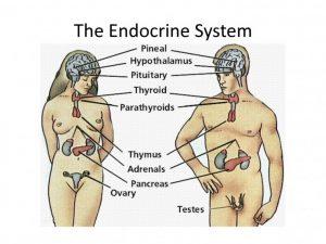 Лечение эндокринных заболеваний_Бородулина